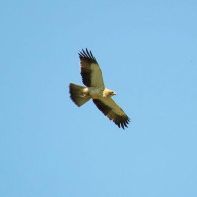 aves_5