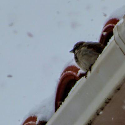 aves_8
